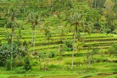 IND_bali_landschap_01_640