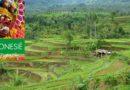 Boekentip: Dolf de Vries reizend door 'Indonesië'