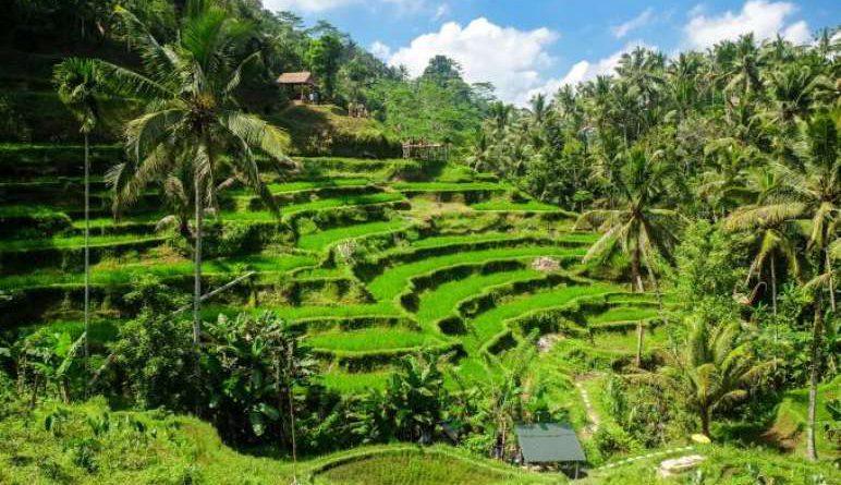 Bali mooi groene sawa